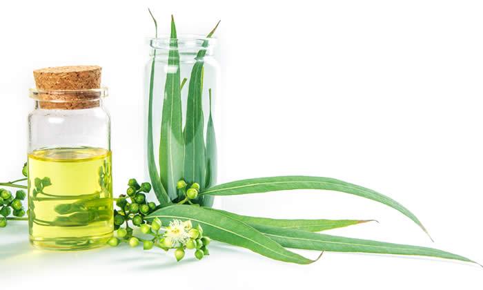 Aceite De Eucalipto Beneficios Y Usos Mi Herbolario Online Mi Herbolario Online