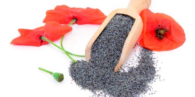 Semillas de amapola para mejorar tu salud