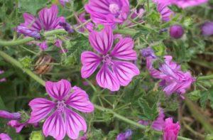 Plantas para tratar los síntomas de la alergia