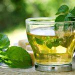 El boldo, el aliado para tu salud digestiva
