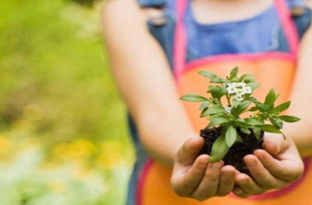 La importancia de las plantas para la salud